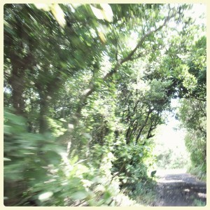 greentunnel
